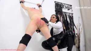 Fucked and milked after whipping – Mistress Ezada Sinn